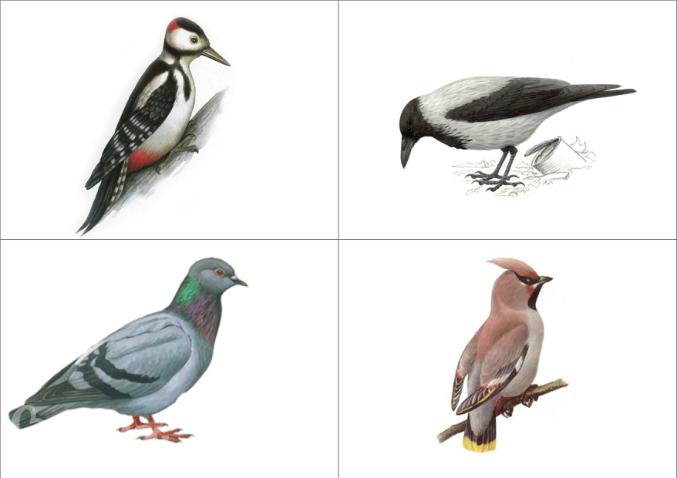 Картинка в детский сад зимующие птицы
