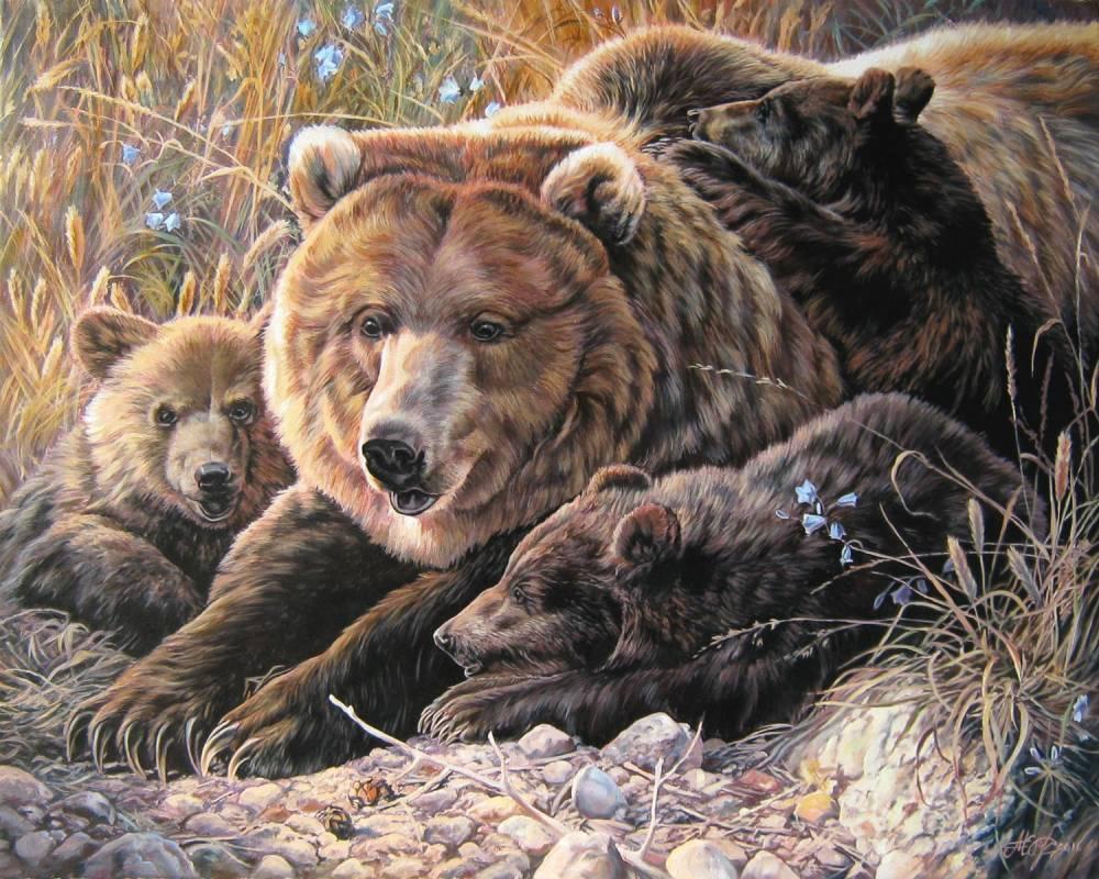 потолков как нарисовать картину медведя показать фото фоне неба для