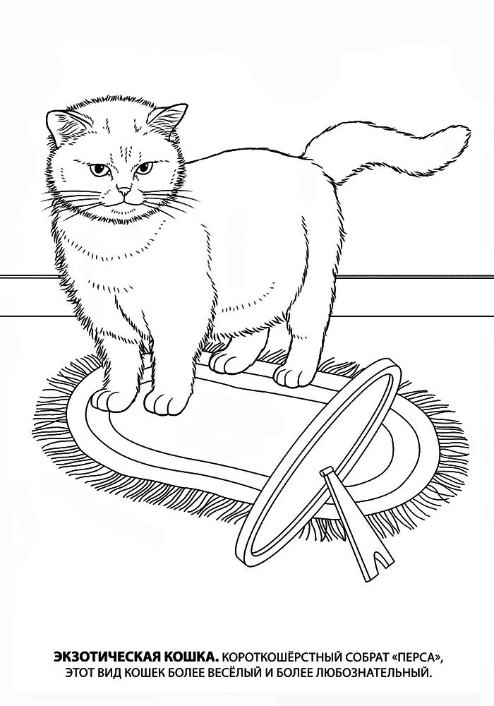 раскраски кошки детские раскраски распечатать скачать